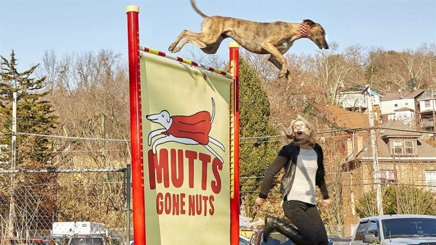 Самый высокий прыжок собаки